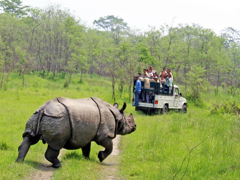 One-horn-rhino