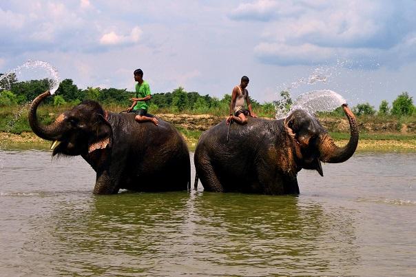 chitwan-national-park-tour