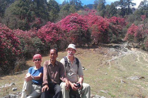 guerrilla-trek-rhododendron-blooming